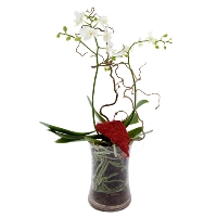 Orchidee in glass jar